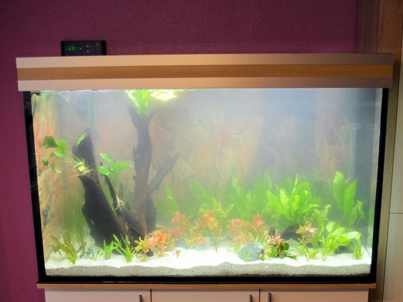 M?belplatten Eiche Sonoma : AquariumUnterschrank modern+ 120×50  Rechteck bei Meduza6