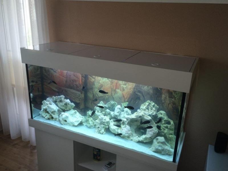 aquarium geschäfte köln