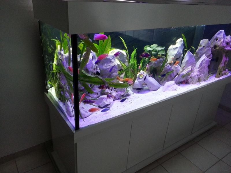 100 cm aquarium hintergrund folie wei 40 cm breite h he bunte. Black Bedroom Furniture Sets. Home Design Ideas