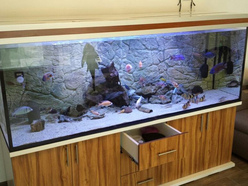 M?belplatten Eiche Sonoma : AquariumUnterschrank modern+s 200×70  Rechteck bei Meduza6