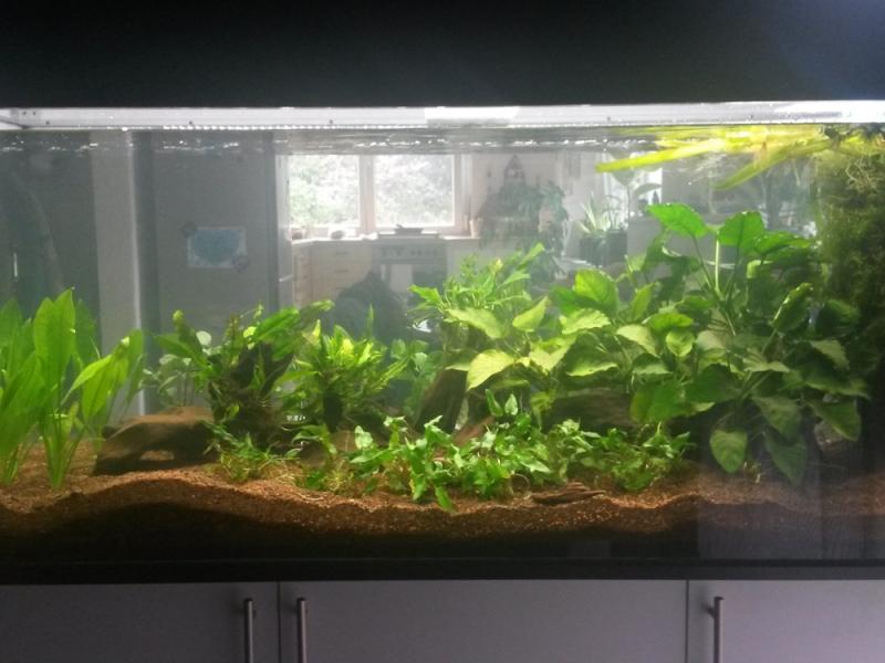 AquariumUnterschrank modern 160×70  Rechteck bei Meduza6