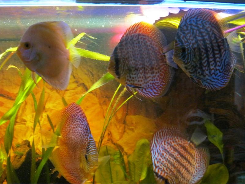 M?belplatten Eiche Sonoma : Aquariumkombination modern+s 200x50x50  Rechteck, 500l, 10mm bei