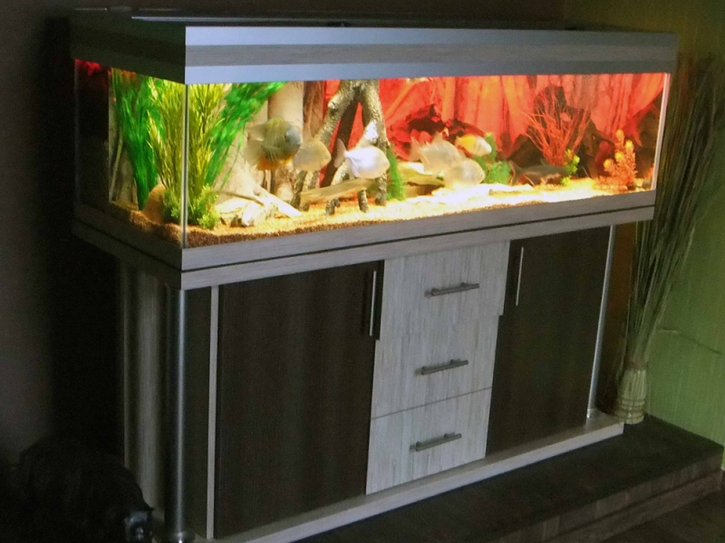 aquarium unterschrank deco s 150x50 rechteck bei meduza6. Black Bedroom Furniture Sets. Home Design Ideas