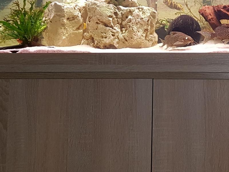 M?belplatten Eiche Sonoma : AquariumUnterschrank modern 160×60  Rechteck bei Meduza6
