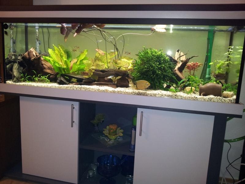 aquarium unterschrank standard r 150x50 rechteck bei meduza6. Black Bedroom Furniture Sets. Home Design Ideas