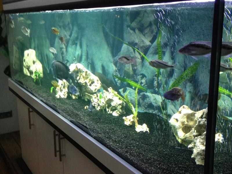 aquarium unterschrank modern 200x60 rechteck bei meduza6. Black Bedroom Furniture Sets. Home Design Ideas