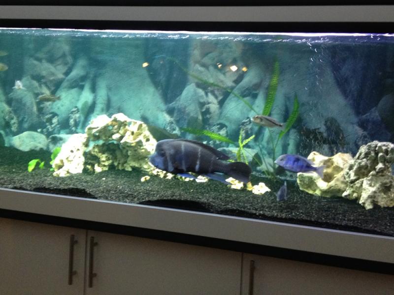 aquarium unterschrank modern 200x50 rechteck bei meduza6. Black Bedroom Furniture Sets. Home Design Ideas