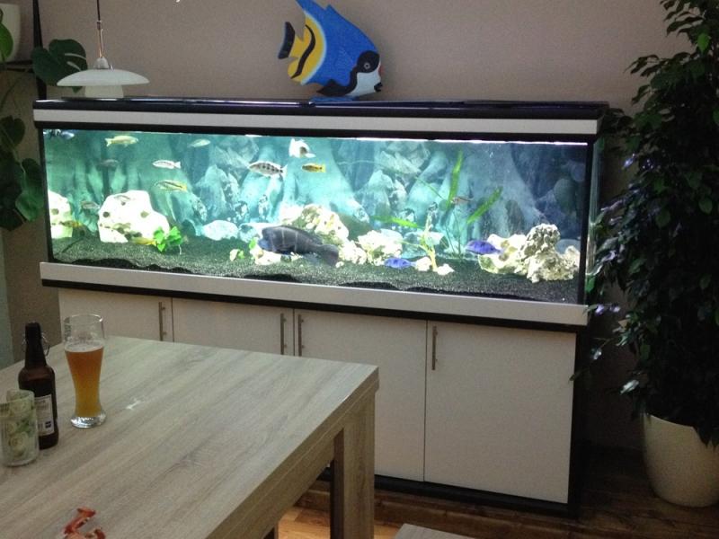aquarium unterschrank modern 200x70 rechteck bei meduza6. Black Bedroom Furniture Sets. Home Design Ideas