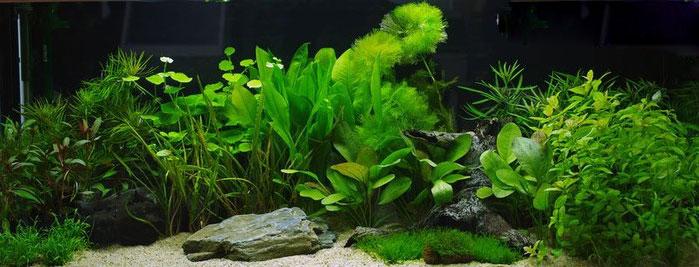 Aquariumhintergr nde mit einem speziellen verfahren sehr gute auswahl und fabelhafte optik - Aquarium hintergrund ausdrucken ...